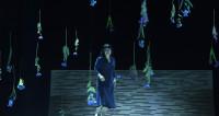 Madame Butterfly à Nancy, papillon bleu